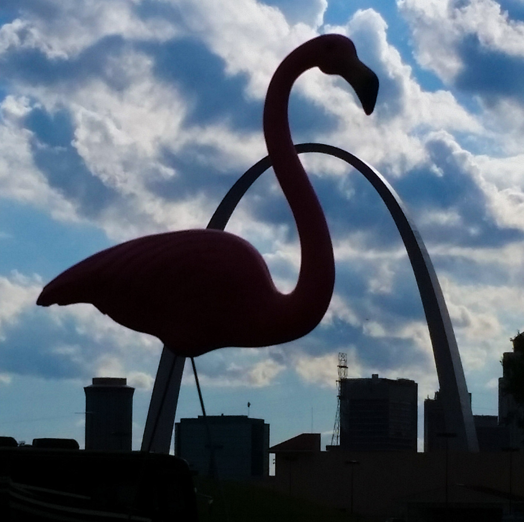 St Louis Cardinals Fear Flamingos