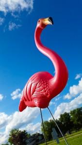 Flo, an impressive flamingo!
