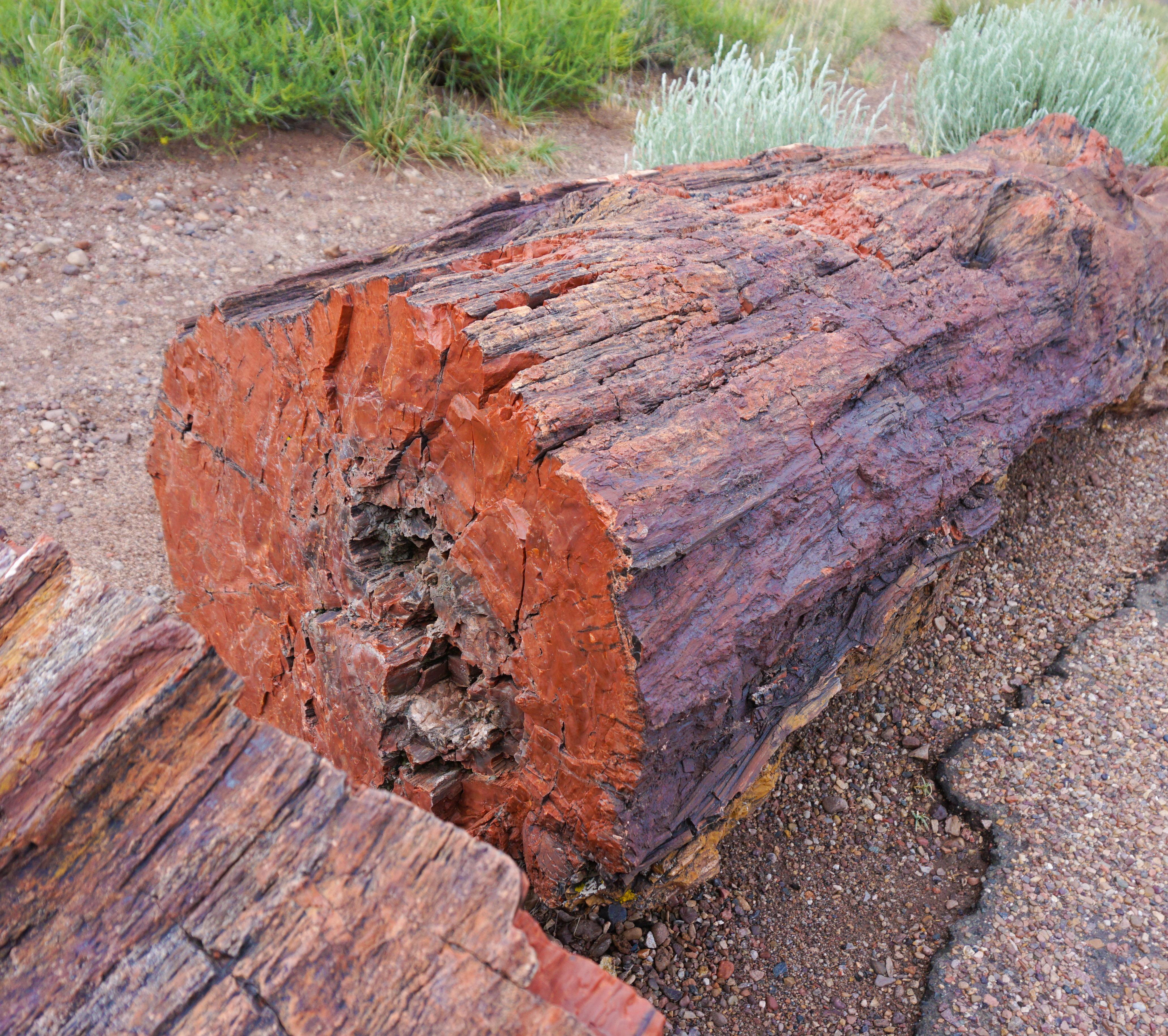 Petrified Forest petrified tree