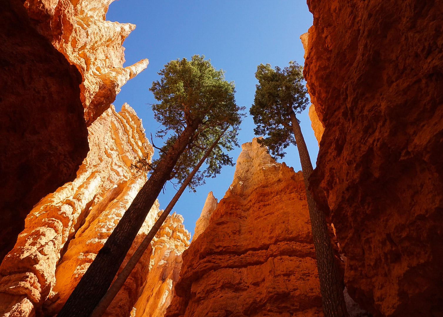 Wall Street section of Bryce Canyon National Park