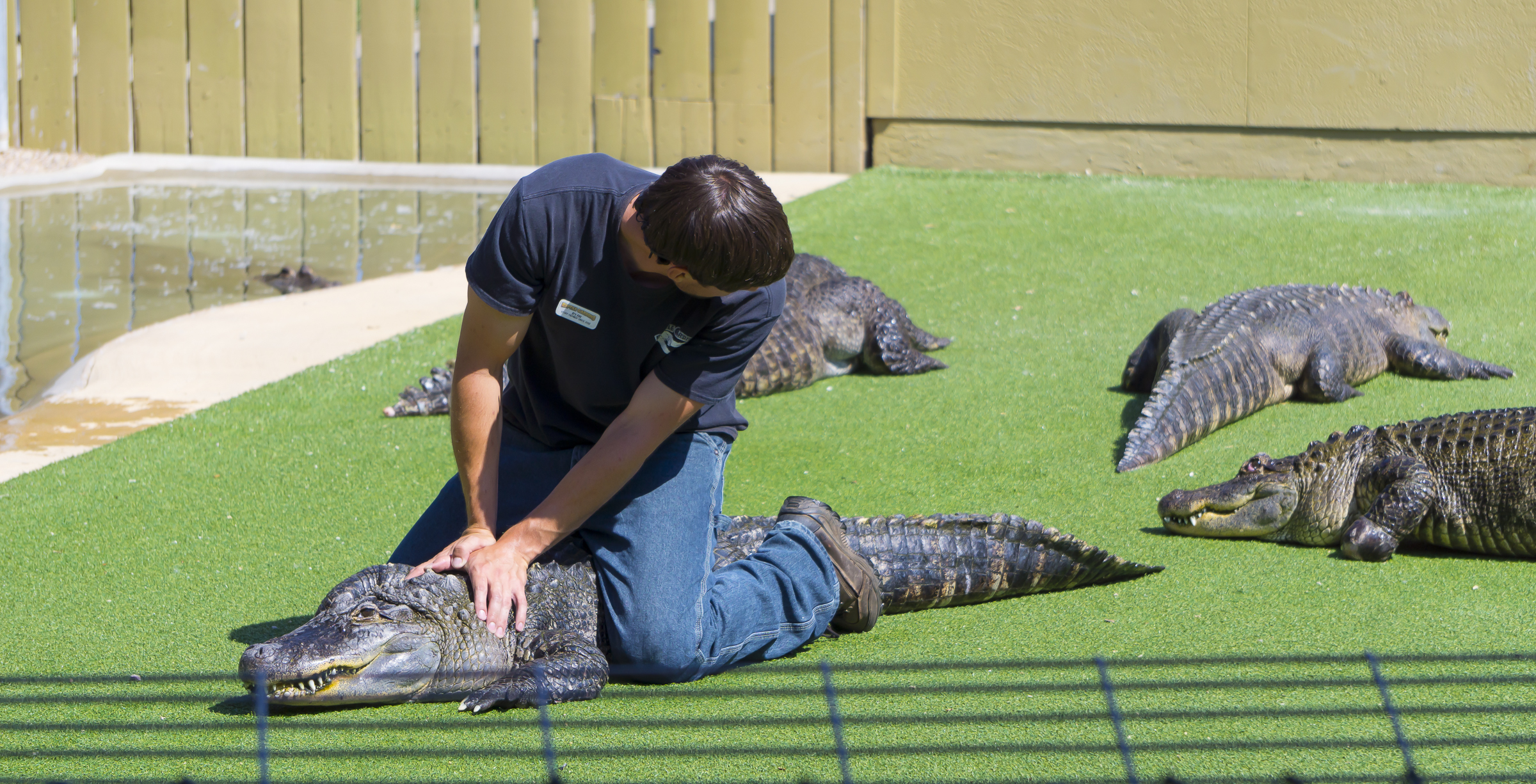 Alligator wrangler at Reptile Gardens, Rapid City, SD